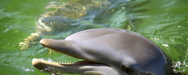 Florida Keys Dolphin Tours