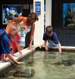 The Touch Tank at Key West Aquarium