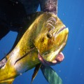 Florida Keys Spearfishing